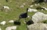 Une chaise pour s'accorder une pause montagnarde