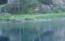 Héron cendré sur les bords du lac de Gaube