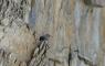 Tichodrome Echelette dans la vire des Fleurs