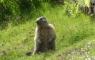 Première marmotte de l'année