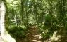 La forêt du Piet