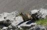 Marmotte lors de la montée vers la brèche de Roland