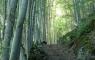 Vallée de Campbieil et sa forêt de bouleaux