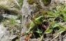 Grande sauterelle verte - Barèges